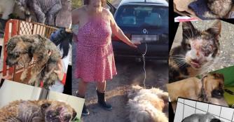 Wir verlangen härtere Strafen für Tierquälerei