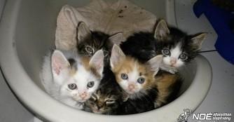 Fünf kleine Waisenkätzchen