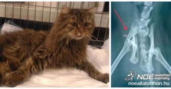 Katze Balzsam mit Beckenbruch