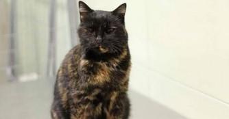 Bolyci, die bezaubernde blinde Katze