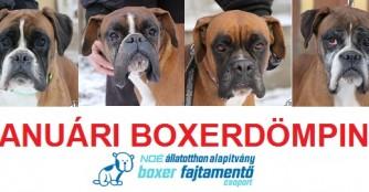 Boxer-Boom im Januar!!!