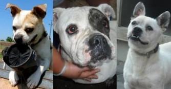 Auch unsere beinahe Bulldoggen hoffen auf eine eigene Familie!