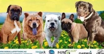 9. Boxer Maifest, Bulldoggen, Cane Corso, Chow-Chow Treffen