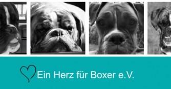 Ein Herz für Boxer!