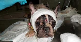 FoszLány: Erster Eindruck beim Tierarzt