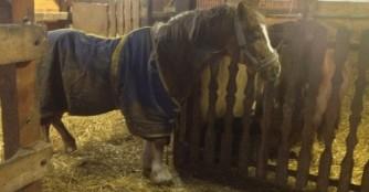 Pony Gazsi geht es sehr schlecht!