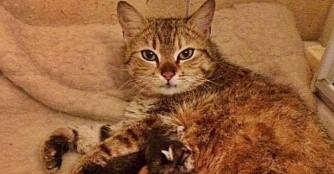 Mieze Imola und ihre 4+1 Kätzchen