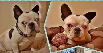 Kalóz unser Super-Wunder-Hund :)