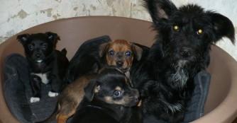 Neue niedliche Hundefamilie in unserer Obhut