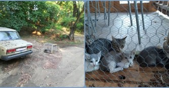 Und nochmal 5 ausgesetzte Katzen...