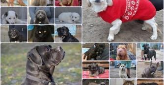 Vergangene Woche fanden 20 Tiere ein Zuhause