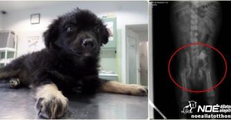 Kleiner Hund mit grossen Schmerzen!