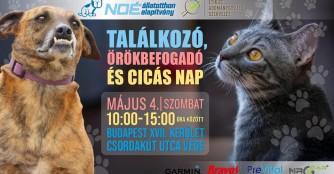 NOÉ-Treffen, sowie Adoptionstag und Katzenfest!