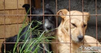 Tierheimhilfsprojekt 2015: Zu Besuch im Tierheim Nyírmada