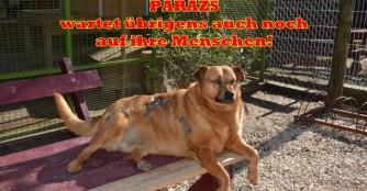 Parázs empfängt Gäste mit Spenden aus Österreich
