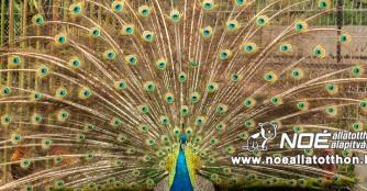 Impressionen vom Pfingstmontag im NOAH Tierheim Ungarn