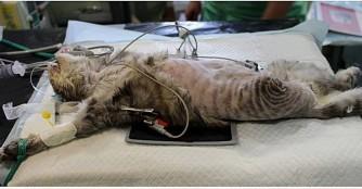 Katze Rose hat ein Bein verloren :(