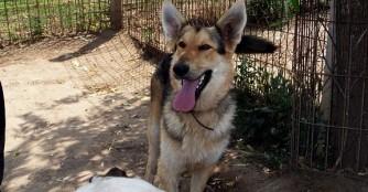 Hund der Woche: Bakancs
