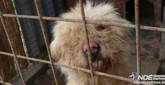 Tierheimhilfsprojekt 2015: Zu Besuch im Tierheim Siklós