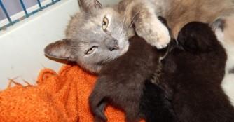 Die Katze der Woche: Úrilány (zu Deutsch: Ehrendame)