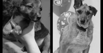 Szamos hat ihr ganzes Leben im Tierheim verbracht