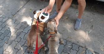 3 Hunde auf dem Weg nach Deutschland