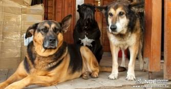 Spendenaufruf für die Schützlinge des NOAH Tierheim Ungarn!