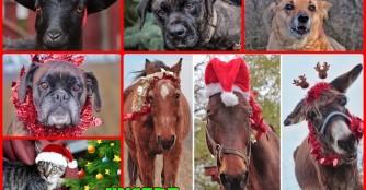 Unsere Weihnachtswunschliste 2019