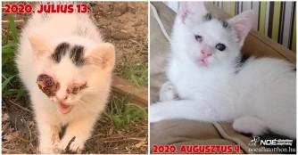 Kätzchen Pápaszem auf dem Weg der Besserung