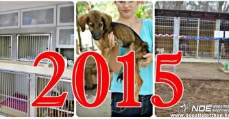 2015, als Träume wahr wurden