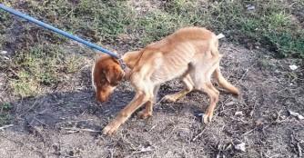 Wie aus 2 geretteten Hunden 12 wurden...
