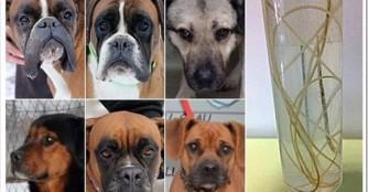 6 weitere Hunde mit Herzwürmern!