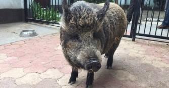 Schwein muss man haben :)