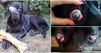 Athos nach der Augenoperation