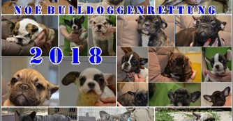 NOÉ Bulldoggenrettung Rückblick 2018