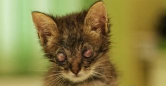 Wir bangen um das Augenlicht von 5 kleinen Kätzchen!