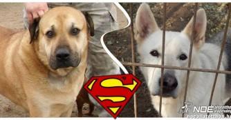Blutspendende Hundehelden: Spong und Chip