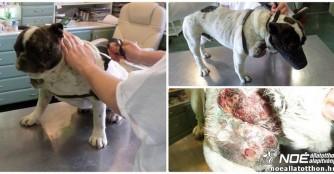 Bulldogge Csárda in schockierendem Zustand!