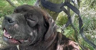 Dwayne wurde im Wald angebunden :(
