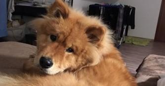 Koda feiert seinen Einjährigen!