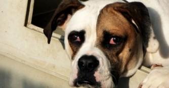 Auch Hunde mit Handicap sind PERFEKT