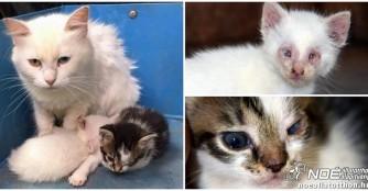 Ausgesetzte Katzenfamilie nun in Sicherheit