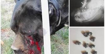 Kabala wurde ins Gesicht geschossen! :(
