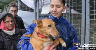 Tierheimhilfsprojekt 2017 - Karcag