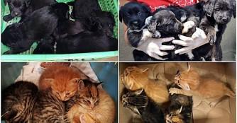 9 ungeplante Jungtiere innerhalb von 2 Tagen...