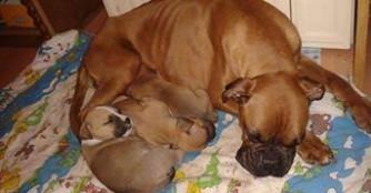 Lizett und ihre Babies