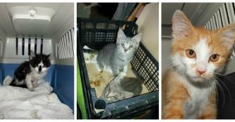 4 neue Kätzchen letzte Woche