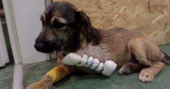 Marnie's verkrüppeltes Beinchen wurde amputiert