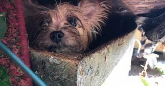 139 Hunde wurden aus der Vermehrerhölle gerettet!
