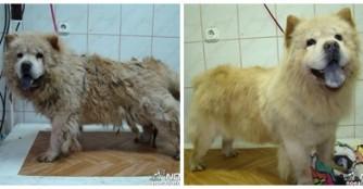 Vom hässlichen Entlein zum schönen Schwan, pardon Chow-Chow